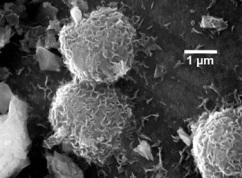 Gambar. Metanogen [http://geology.com]
